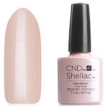 CND Dandelion